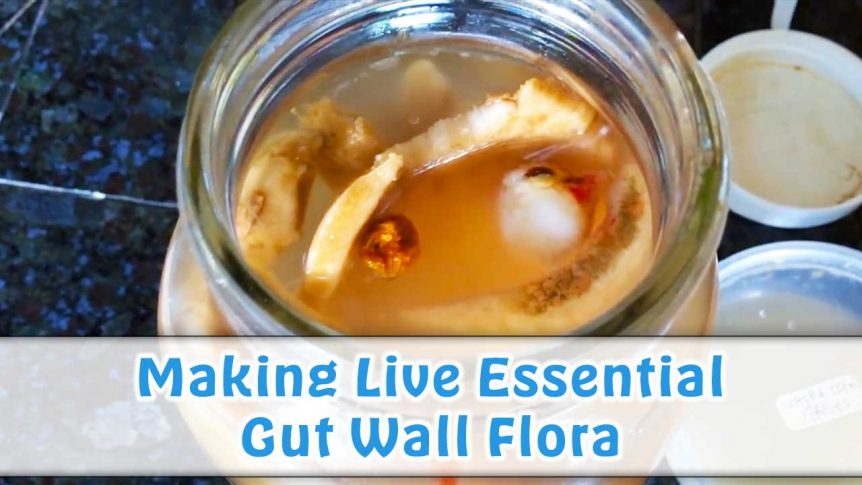 Making Live Essential Gut Wall Flora