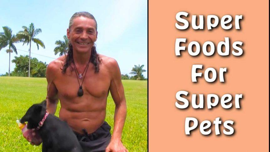 Super Foods For Super Pets