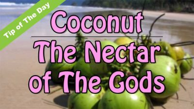 Coconut The Nectar of The Gods