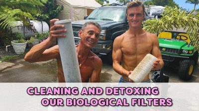 Cleaning and Detoxing Our Biological Filters