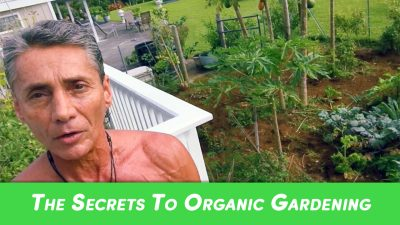 The Secrets To Organic Gardening