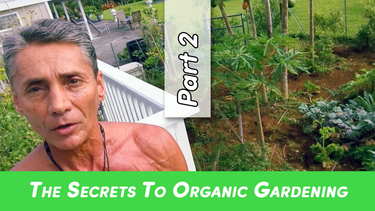 The Secrets To Organic Gardening Part 2