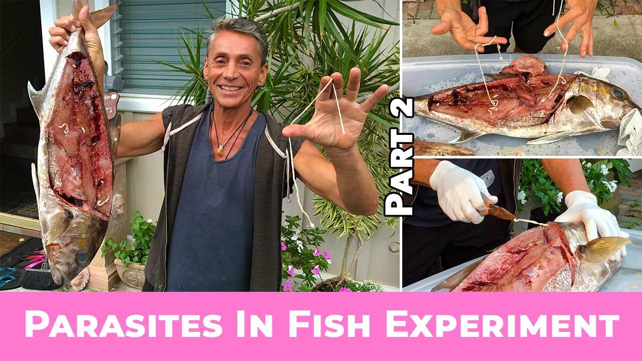 Parasites In Fish Experiment Part 2